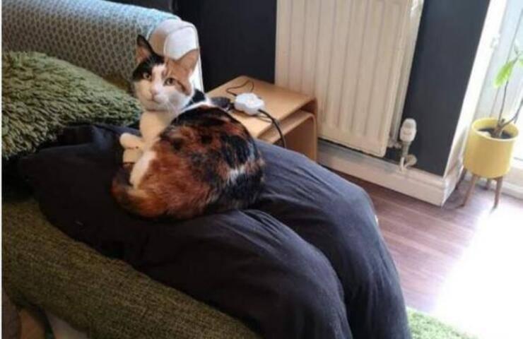 Ziggy il gatto troppo affettuoso