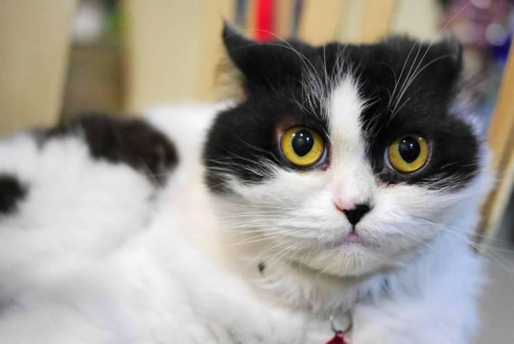gatti dopo la quarantena