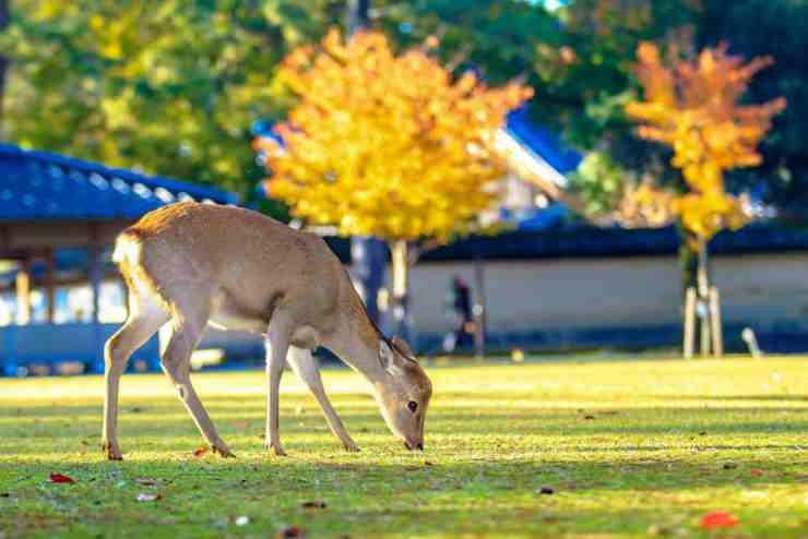 Il cervo immortalato nello scatto fotografico (Foto Facebook)