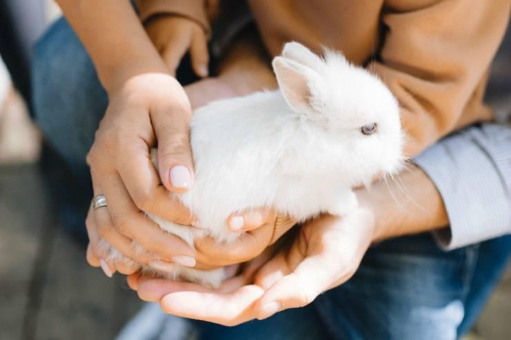 Prendere in braccio il coniglio