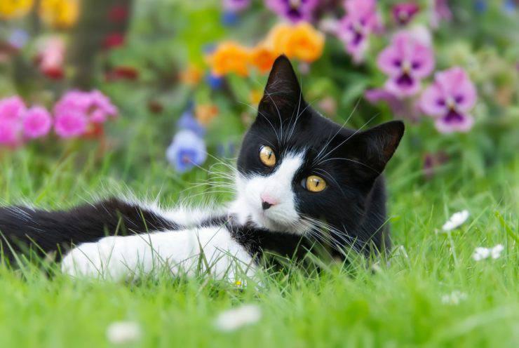 Spazio esterno per il gatto