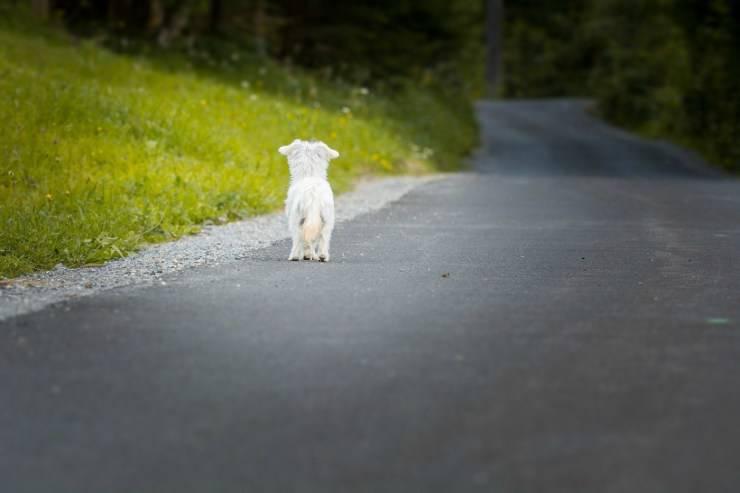 Abbandonare un cane