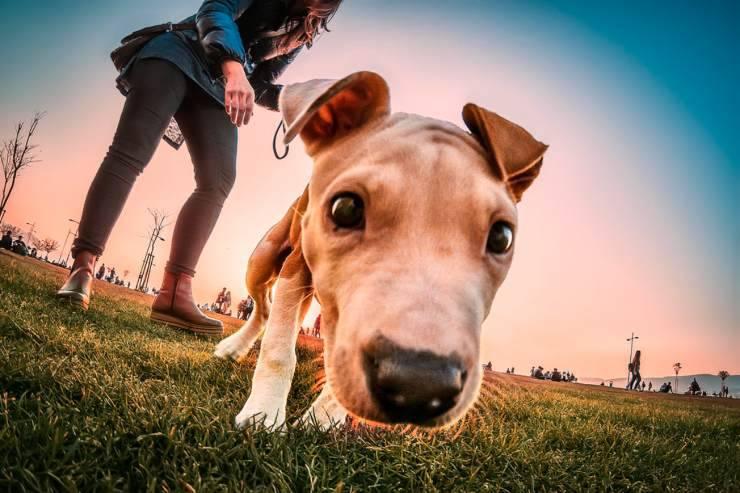 cane può mangiare tacchino