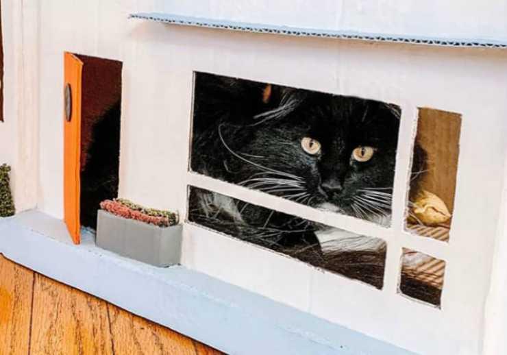 Il gatto che guarda attraverso la finestra Facebook