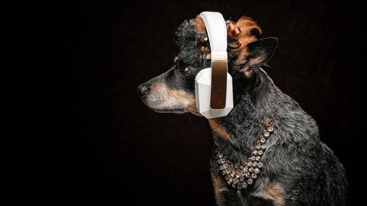 canzoni sui cani