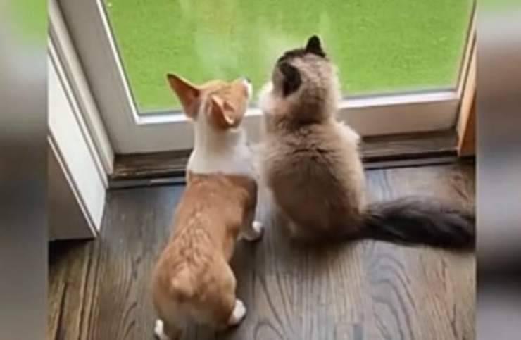 Un'amicizia speciale (Foto video)