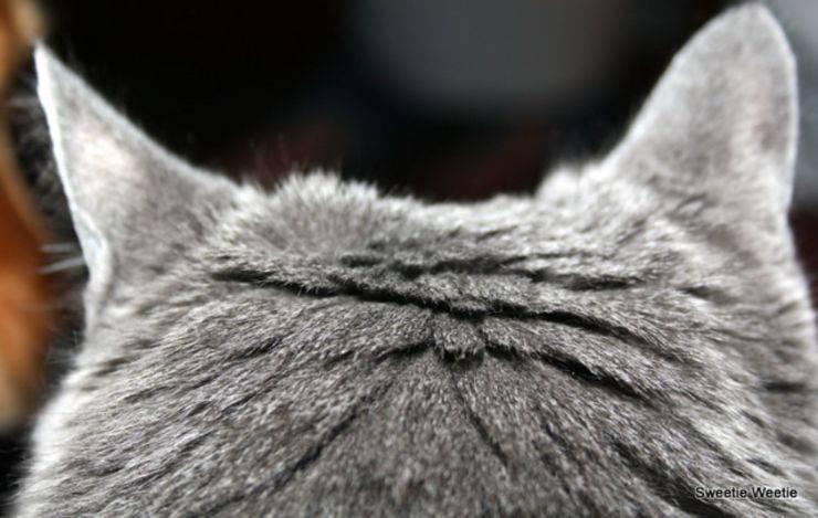 Quali sono gli animali con l'udito migliore?