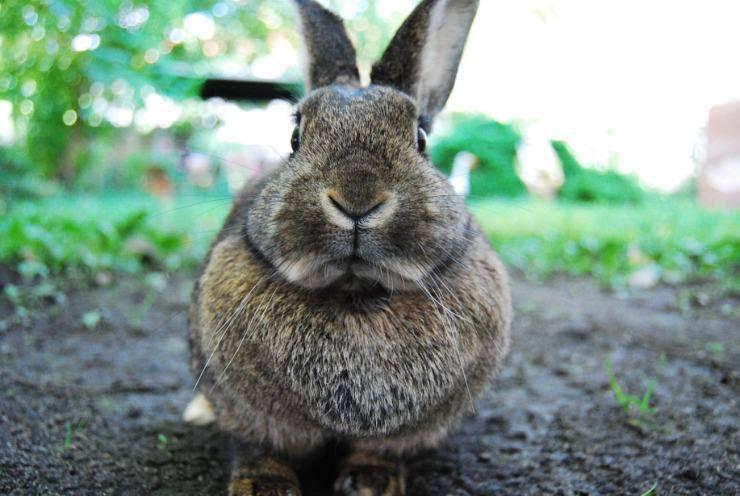 Cosa mangia il coniglio