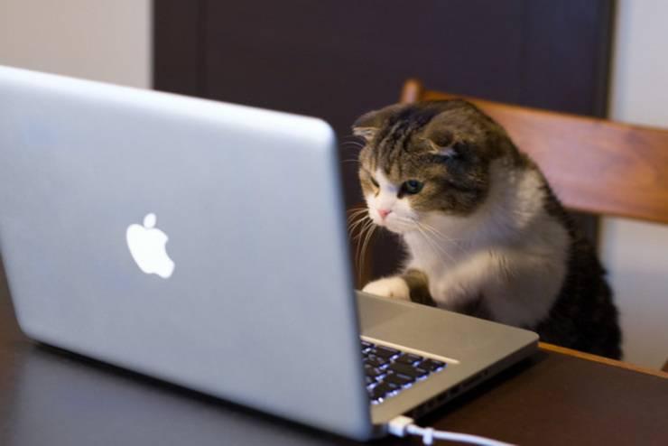 lavori umani per gatti