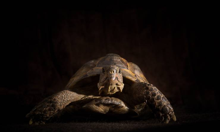 tartarughe vedono al buio