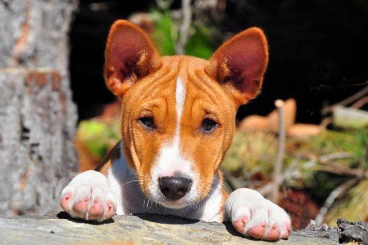 cucciolo cane africa