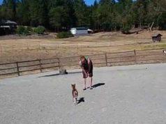 Il pony e il padrone della fattoria (Foto video)