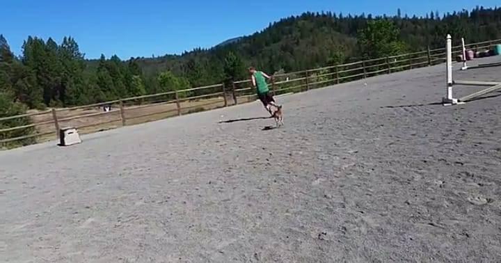 Il pony insegue il padrone (Foto video)