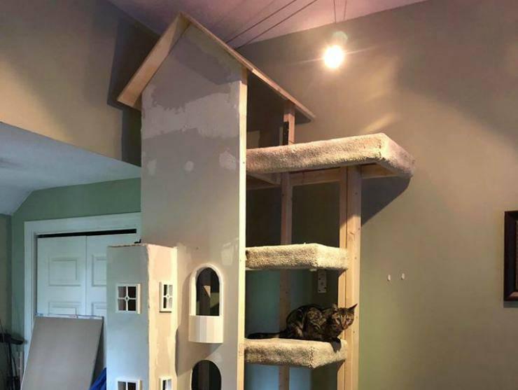Il gatto osserva dall'alto (Foto Facebook)