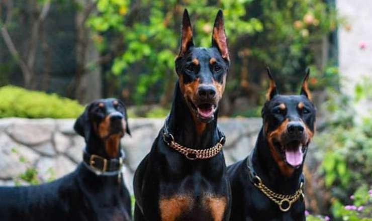 I cani in fila (Foto Instagram)