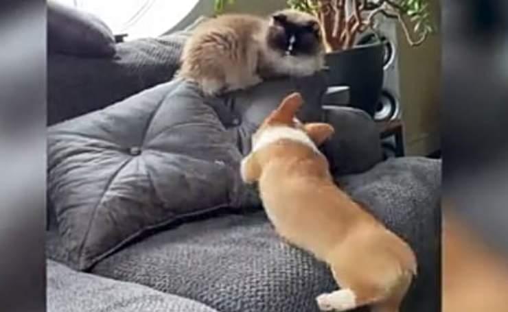 Coccole e inseguimenti (Foto video)