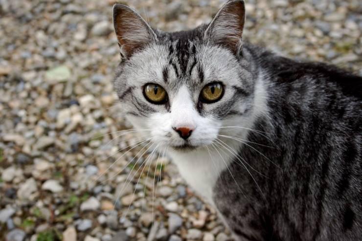 gatto mangia insetti caccia