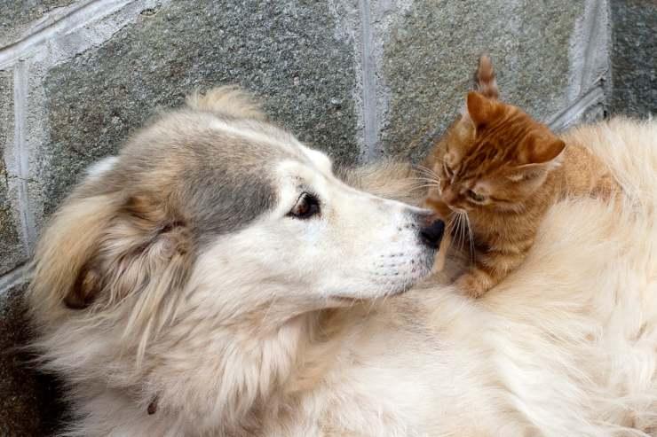 gatto attacca il cane
