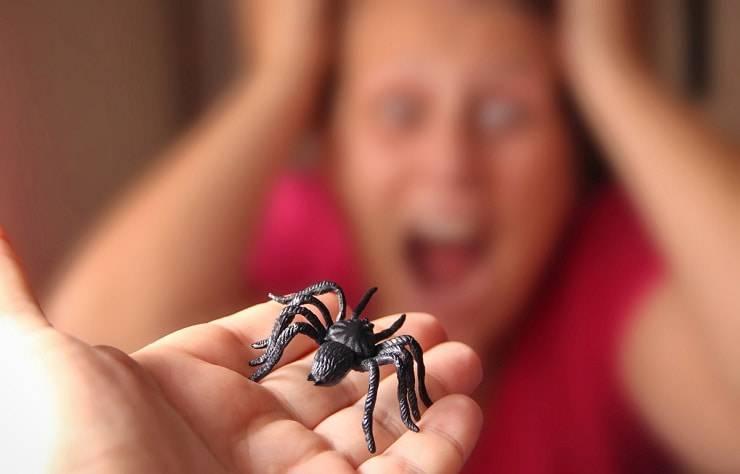 paura ragni