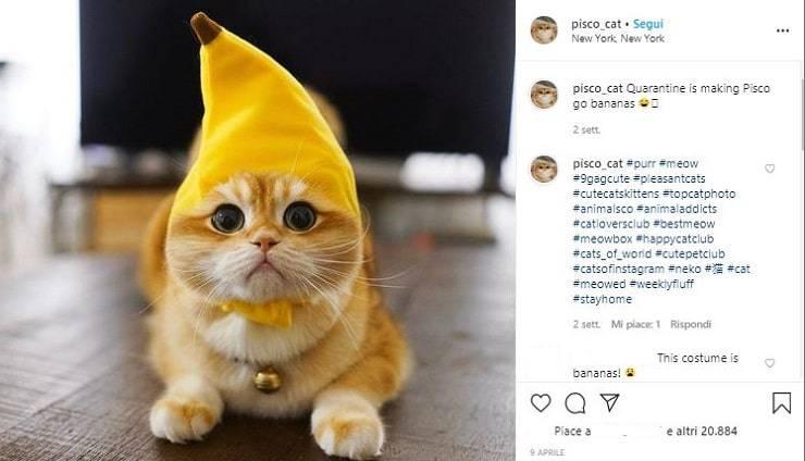 pisco banana