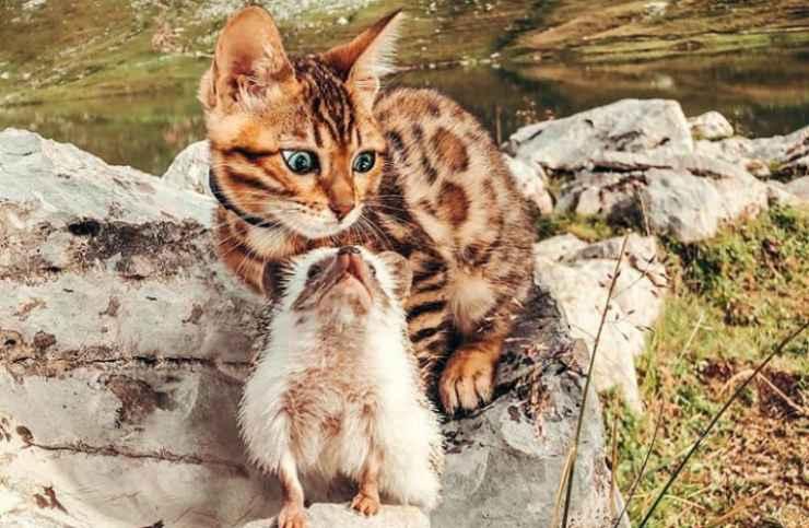 Il riccio e la gattina in montagna (Foto Instagram)