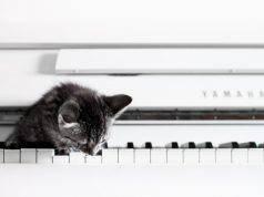 canzoni sui gatti