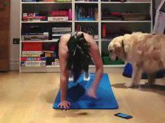 Il cane che vuole sedersi sul tappetino (Foto video)