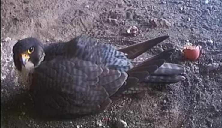La cova delle uova (Foto video)