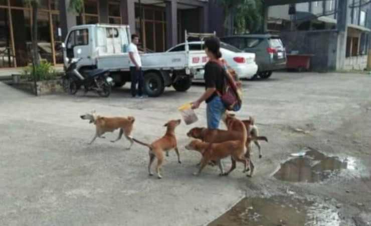 La donna che porta il cibo ai randagi (Foto Facebook)