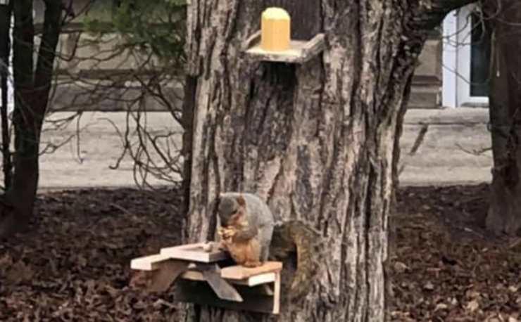Il tavolo per lo scoiattolo (Foto Facebook)