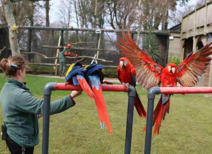 I pappagalli nello zoo (Foto Facebook)