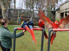 La guardiana e i pappagalli (Foto Facebook)