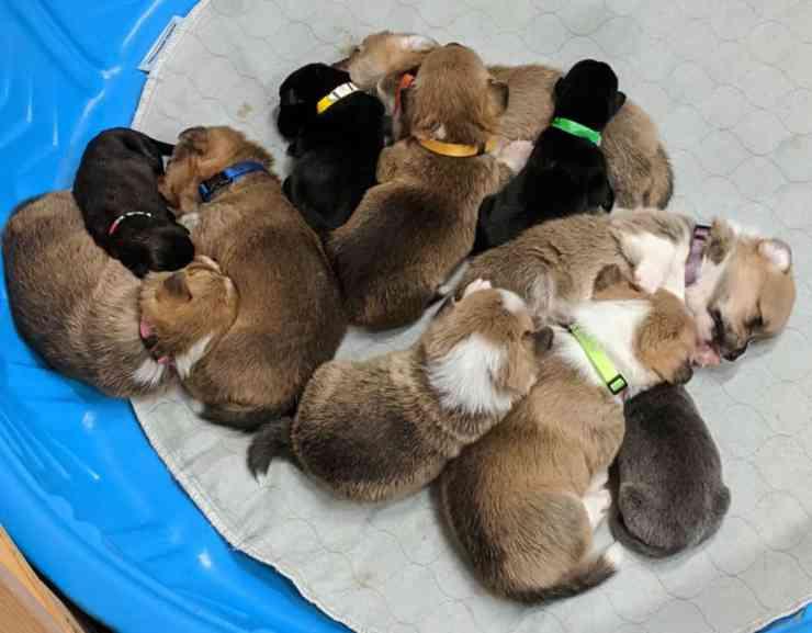 Cuccioli uniti (Foto Facebook)