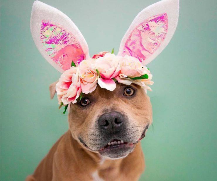 Pasqua con il cane