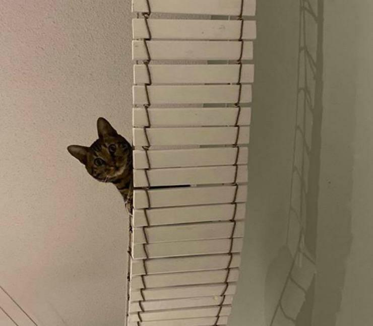 Il gatto sulla passerella (foto Facebook)