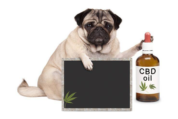 effetti CBD animali domestici