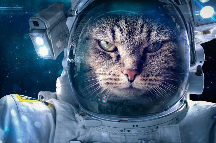 pilota satellite gatto