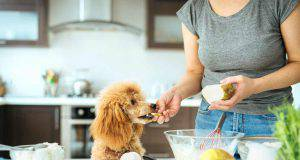 Il cane che assaggia il dolce (Foto Adobestock)