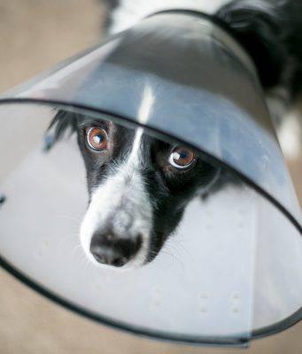hot spot cani