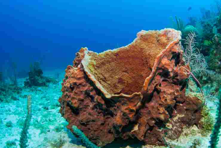 Un tipo di spugna marina (Foto Adobestock)