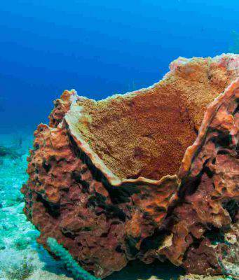 Una spugna marina (Foto Adobestock)