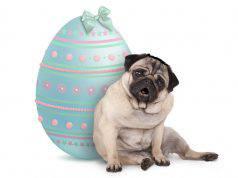 cane uovo di pasqua