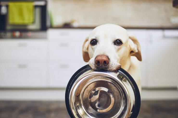 Risparmiare soldi con un cane