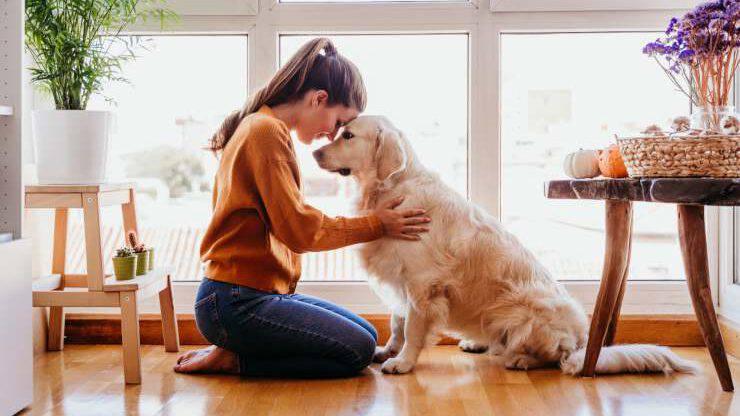 Médecine pour chiens