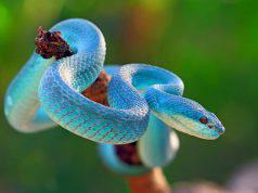 Paura dei serpenti