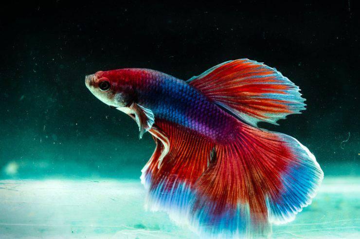 perchè i pesci nuotano in verticale
