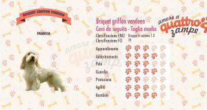 Briquet griffon vendeen scheda razza