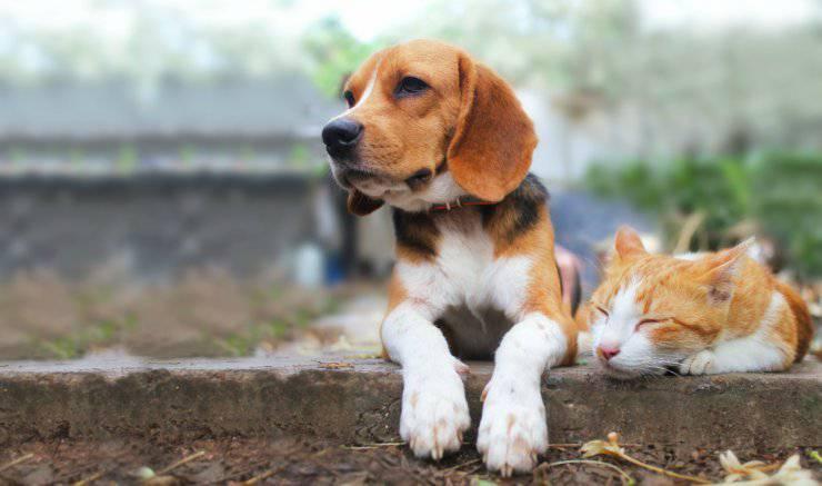 I gatti vivono più a lungo dei cani