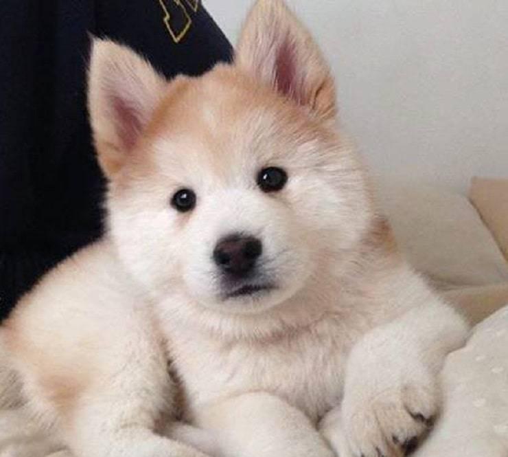Nuove razze canine