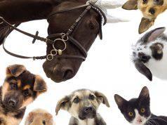 falsi miti sugli animali